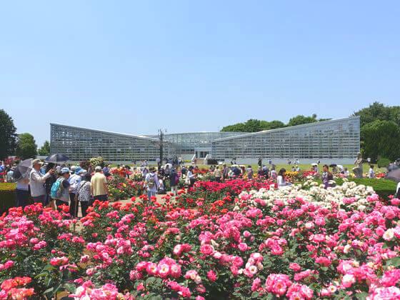 バラ 神代植物公園