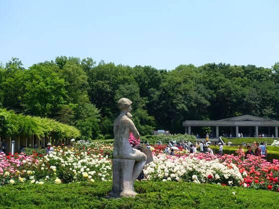 ばら 神代植物公園