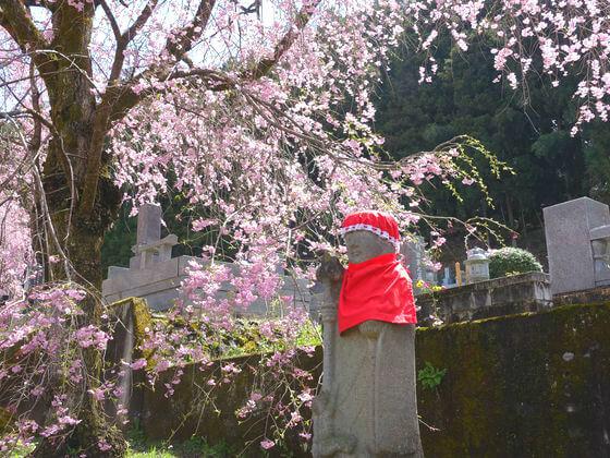 秩父 清雲寺 桜