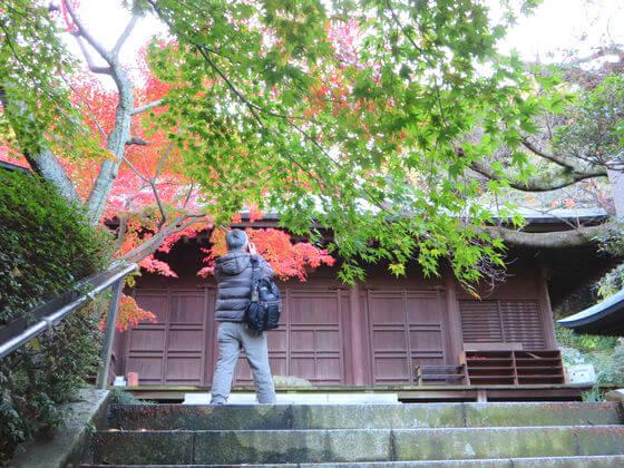鎌倉 長勝寺 カエデ