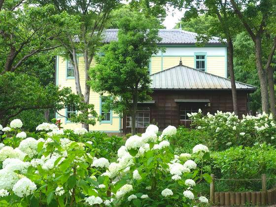 郷土の森博物館 紫陽花