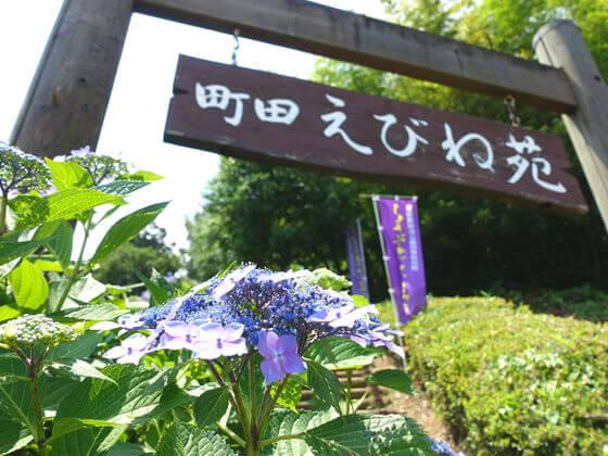 薬師池公園 町田えびね苑
