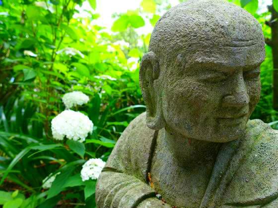浄慶寺 紫陽花