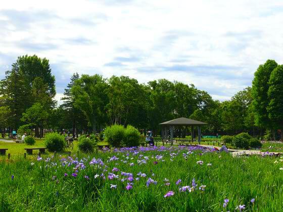 花菖蒲 水元公園