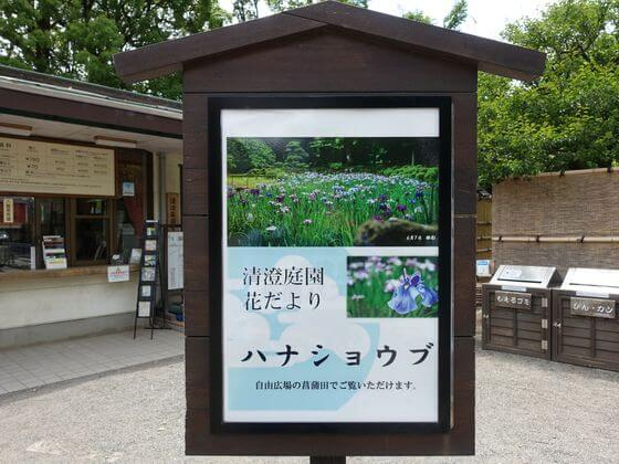 清澄庭園 花菖蒲と遊ぶ