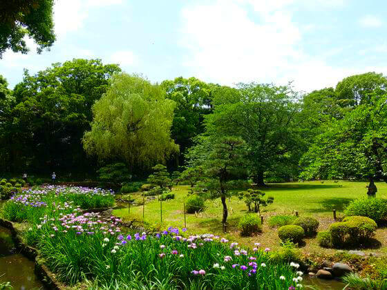 清澄庭園 花しょうぶ