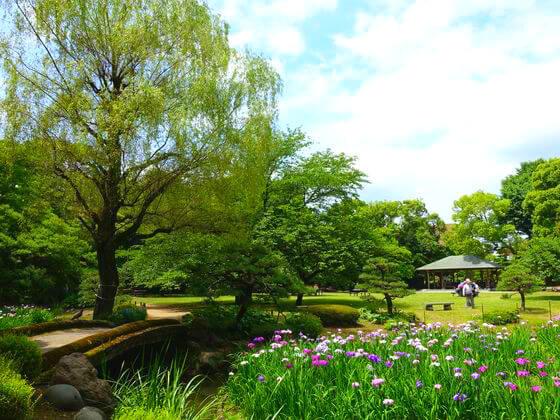 ハナショウブ 清澄庭園