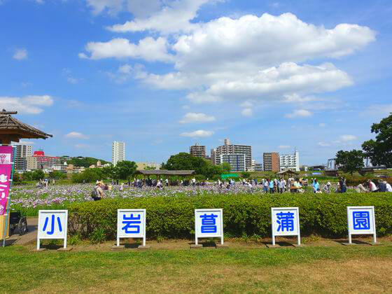 江戸川 小岩菖蒲園