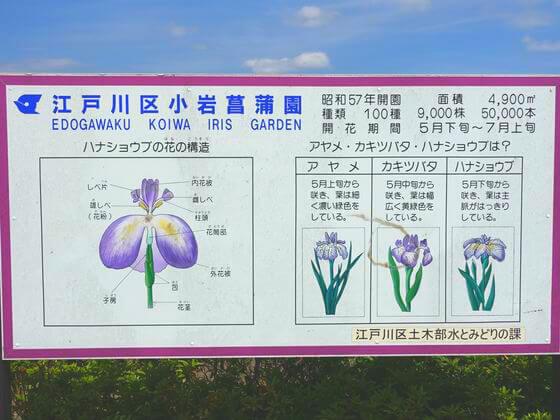 小岩菖蒲園 情報