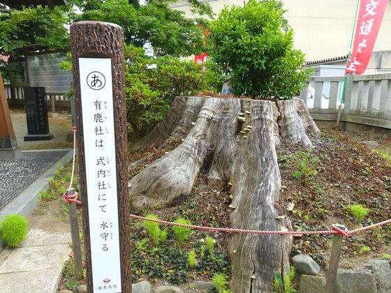 有鹿神社 欅