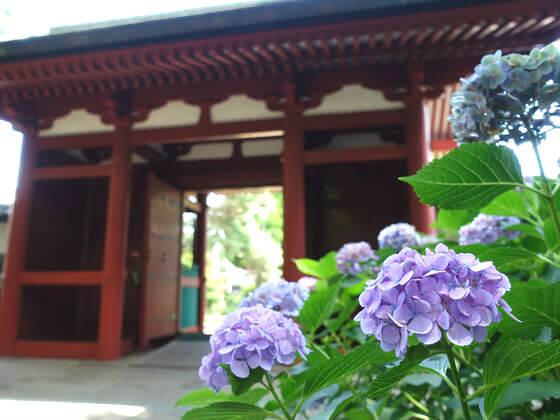 仙波東照宮 紫陽花