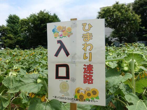 ひまわりガーデン武蔵村山 ひまわり迷路