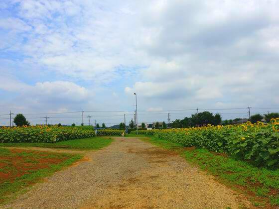 武蔵村山 ひまわり