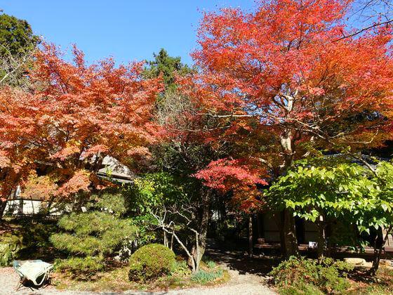 鎌倉 浄智寺 楓