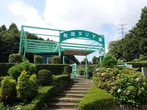 薬師池公園 ダリア園