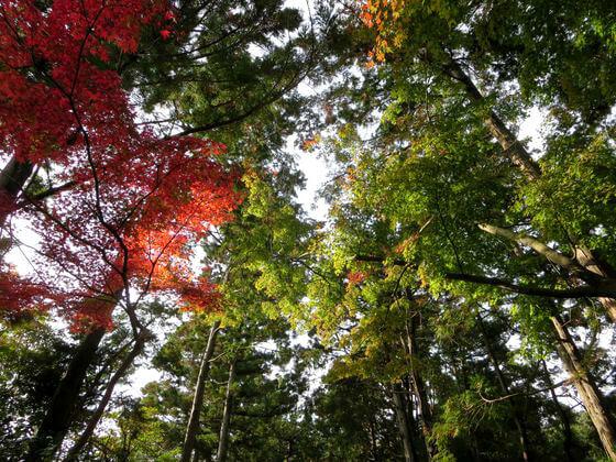 壽福寺 紅葉