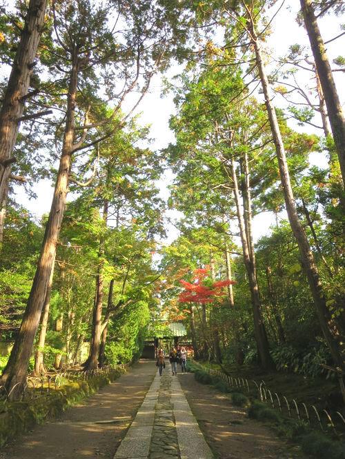 壽福寺 カエデ