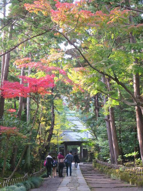 鎌倉 壽福寺 紅葉