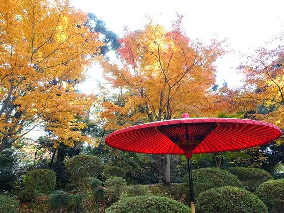 東京 六義園 紅葉