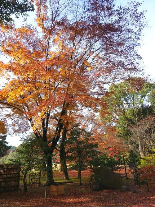 文京区 六義園 紅葉