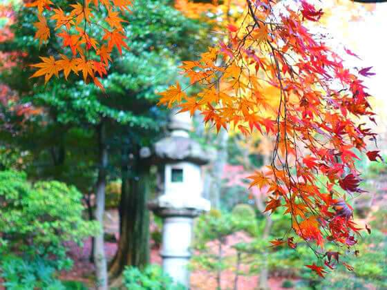 旧古河庭園 紅葉 日本庭園