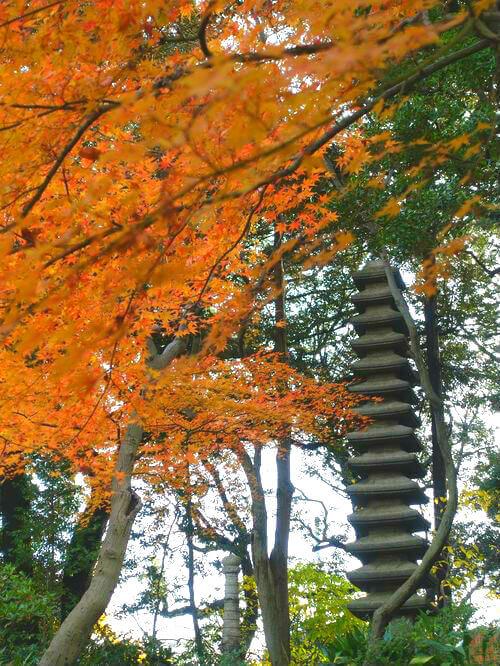 旧古河庭園 日本庭園 紅葉