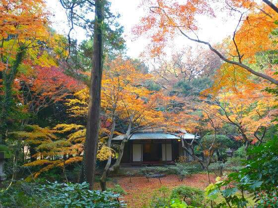 旧古河庭園 茶室 紅葉