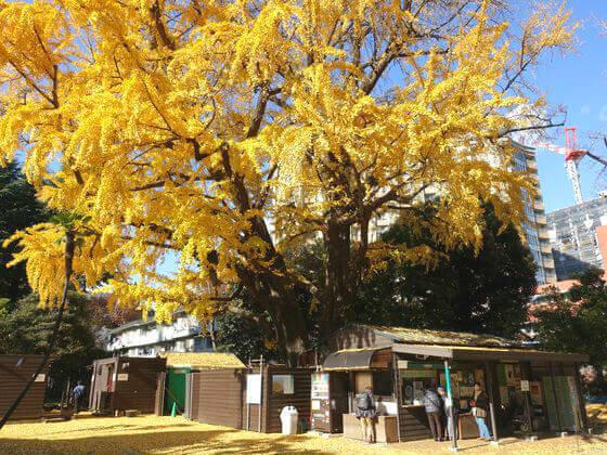旧岩崎邸庭園 紅葉