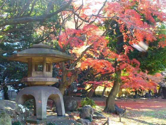 旧岩崎邸庭園 紅葉 現在