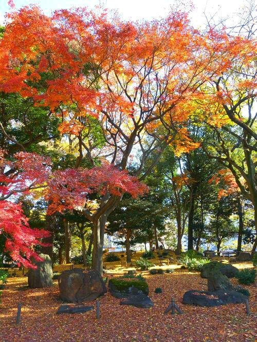 紅葉 旧岩崎邸庭園