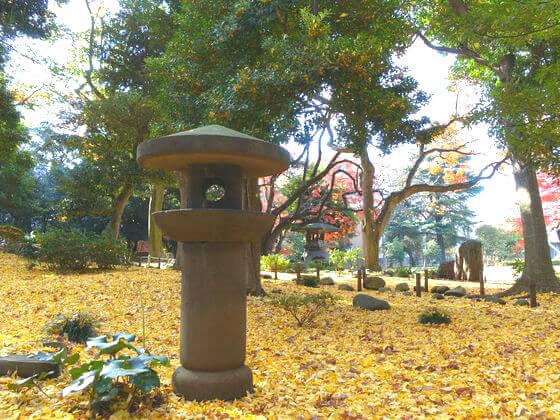 旧岩崎邸 銀杏