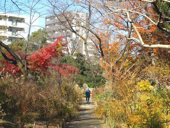 東京 向島百花園 紅葉
