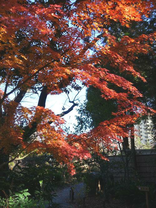 紅葉 向島百花園