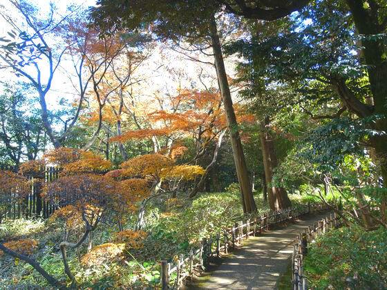 東京 殿ヶ谷戸庭園 紅葉