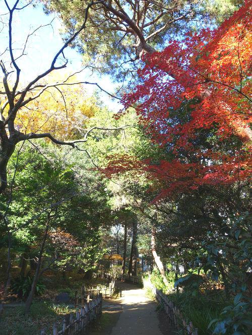国分寺 殿ヶ谷戸庭園 紅葉