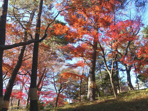 殿ヶ谷戸庭園 紅葉 現在