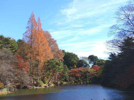新宿御苑 下の池 紅葉