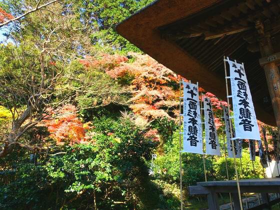 鎌倉 杉本寺 楓