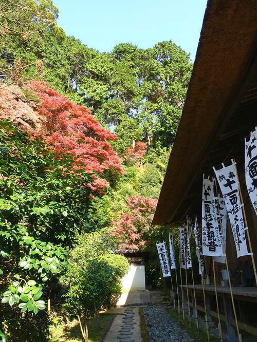 紅葉 杉本寺
