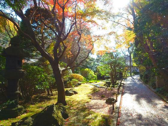 鎌倉 報国寺 紅葉