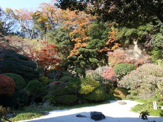 報国寺 中庭 紅葉