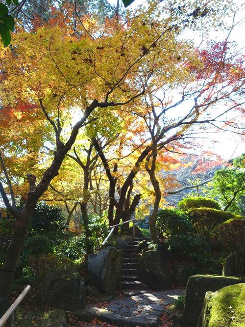 紅葉 報国寺 鎌倉
