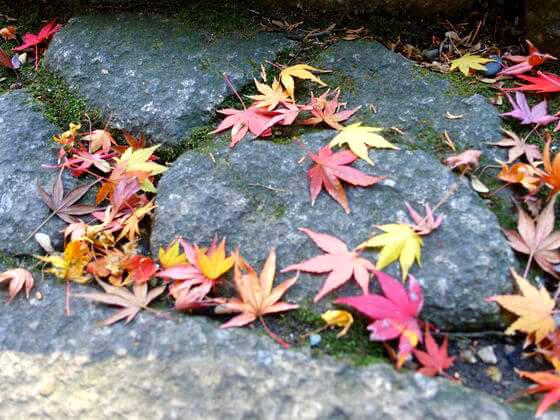 紅葉 鎌倉 報国寺