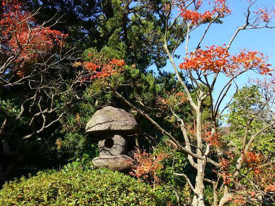 紅葉 浄妙寺