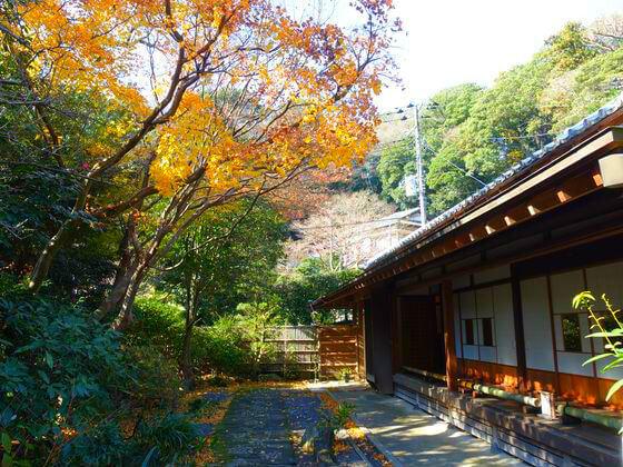 浄妙寺 カエデ