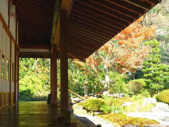 浄妙寺 楓