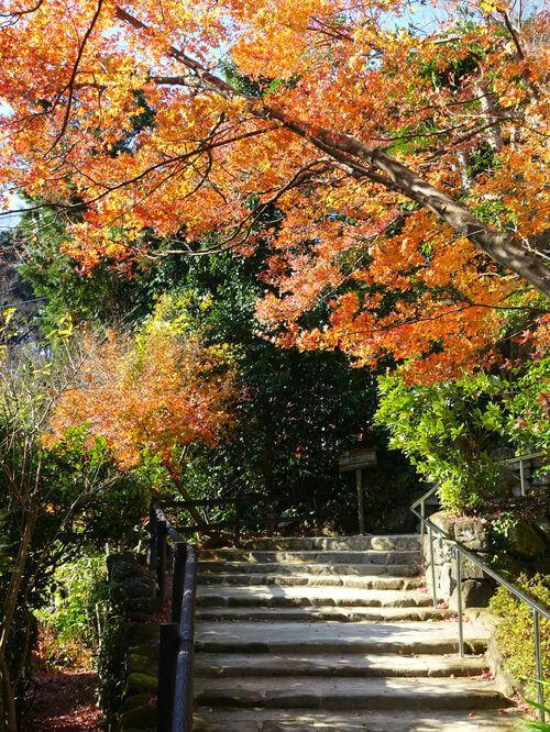 鎌倉 浄妙寺 カエデ