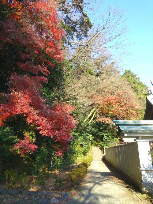 カエデ 鎌倉宮