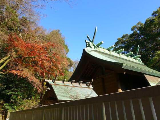 鎌倉宮 モミジ