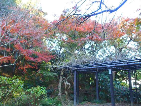 鎌倉宮 神苑 紅葉